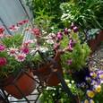 庭・アイアンスタンドの花