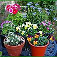 庭・ガーデンテーブルの上の花