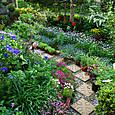 2012.05.06の庭