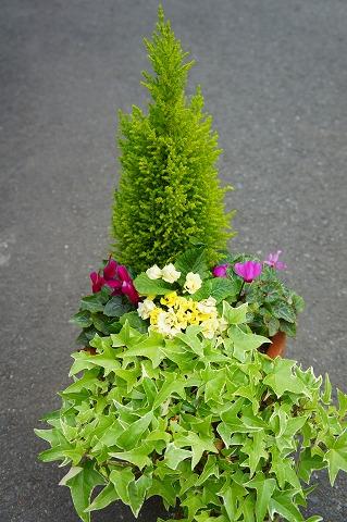 ガーデンシクラメンの寄せ植えのリメイク