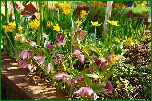2013/03/19 春の庭