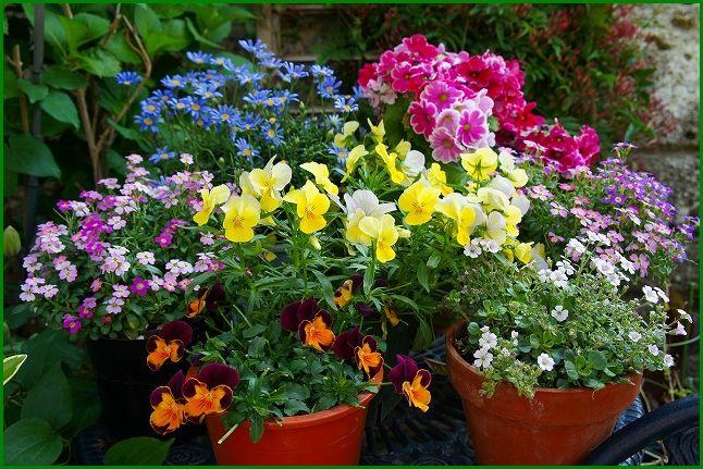 2013/04/23 庭・ガーデンテーブルの上の花