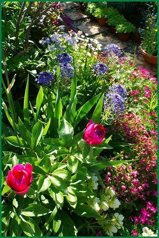 5月13日の庭