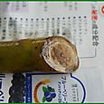 プルメリア・レモンサンセット発根せず 2013/06/22