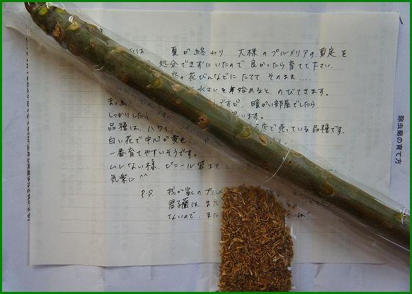 プルメリア・レモンサンセットの挿し穂を頂く(2012.11.01)